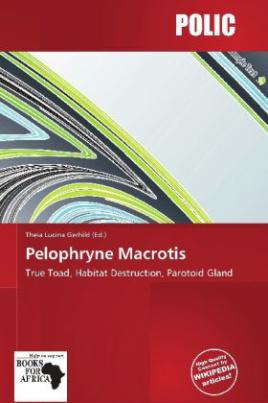 Pelophryne Macrotis