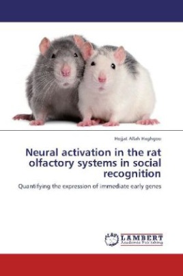 Neural activation in the rat olfactory systems in social recognition