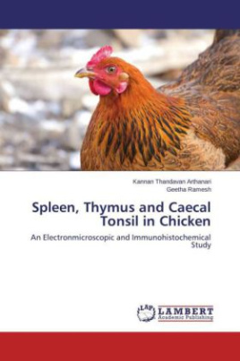 Spleen, Thymus and Caecal Tonsil in Chicken